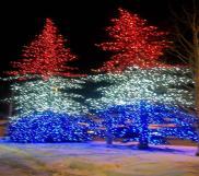 Patriotic Trees